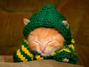 kitten in hooded jumper