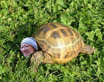 me as a tortoise - original image from Wikimedia
